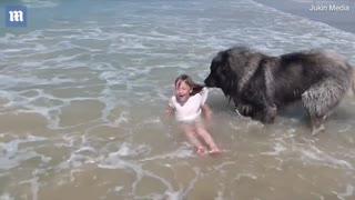 Rescue Dog Saves Granddaughter