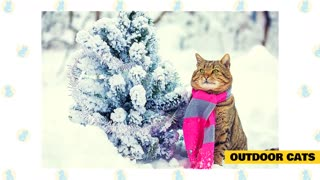 Cats& Cold Weather