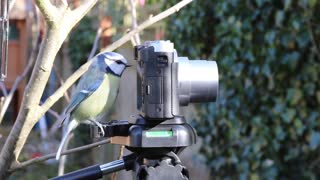 Curious Little Bird Looking at a Camera