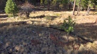 Beehive Trail 1