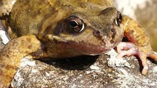 Frog Amphibian Animal Forest Nature Macro Exotic Amazing New HD 2021