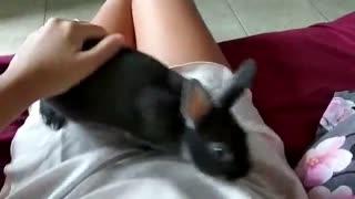 Cute black bunny