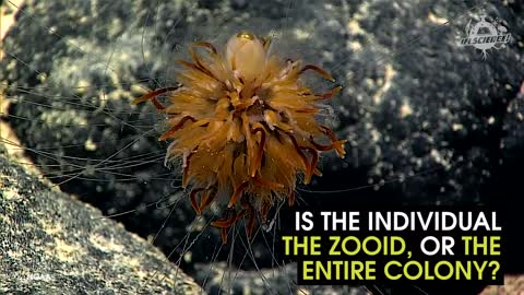 This Sea Critter Bears A Striking Resemblance To A Flower