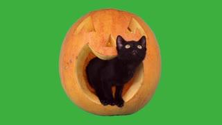 Halloween cat video