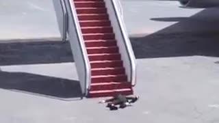 Joe Biden Falls Down AF1 Stairs