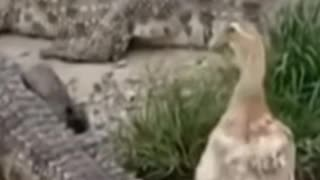 FUNNY ANIMAL VIDEO NEVER SEEN BEFORE