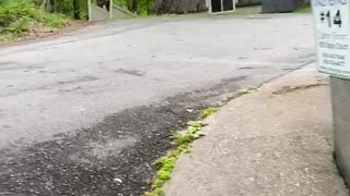 Family of Bears Break into Car for Snacks