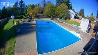 Rowdy Pooch Sprints Across Pool Cover