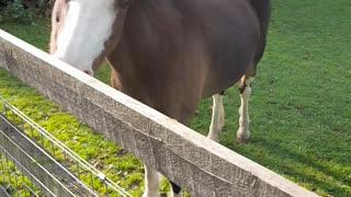 MY HORSES HORSES 🐎🐎🐎