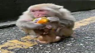 Super Cute Baby Monkey