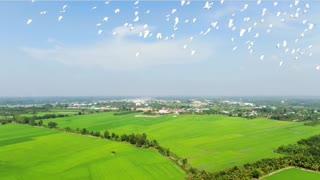 BIRDS ,AMAZING BIRDS ,BIRDS VEDIO