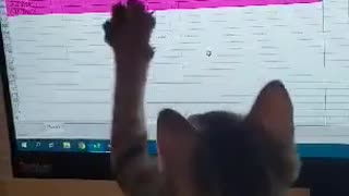 Kitten chasing a mouse