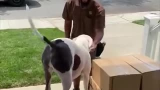 Dog Getting a Treat From UPS Delivery Man