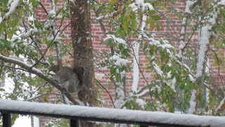 Poor squirrel stuck in a tree during a snowstorm