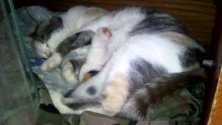 My cat feeds kittens.