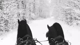 Winter, pleasant atmosphere