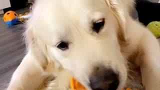 Dog Loves Eating Carrots