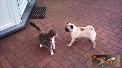 Cats and Dogs Meeting Each other First Time