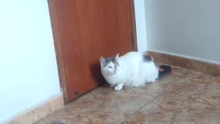 watching a cute cat