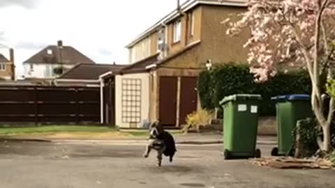 Bat dog in slow motion