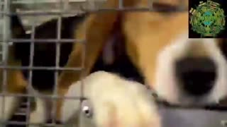 DISTURBING: Fauci-Funded Labs TORTURED Puppies