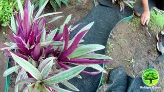 DIY garden decoration   Design
