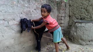 little kids playing with pet goat