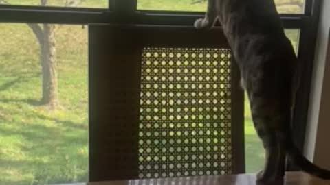 A Young Bengal Cat Bird Watching Spring Birds