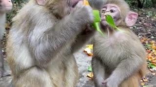 happy monkey family life