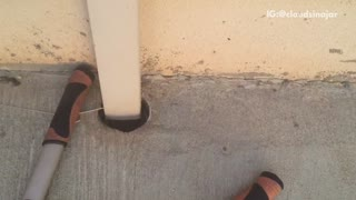Rattle snake crawls down pipe