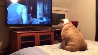 bulldog watch horor movie