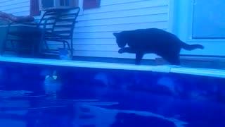 House Cat Attacks Shark