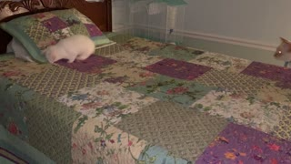 Bunny playing on bed