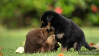 TAKE A LOOK AT THIS BEAUTIFUL PUPPIES