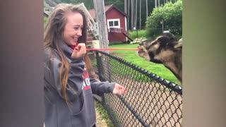 Funniest Moments Baby Meet Animals.funny video