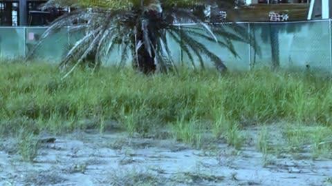 Bygone Classic Motels Of Treasure Island Florida