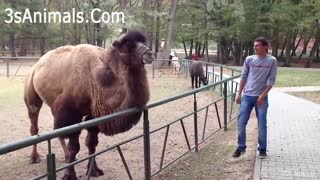 Funniest Animals Scared People Reaction of 2020