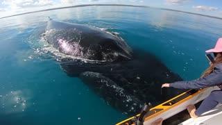 Friendly Whales Play with Stationary Jet Ski