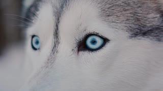 Um cachorro muito bonito