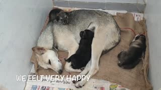 Mother dog helps puppies