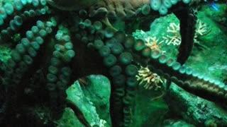 Bmore octopus