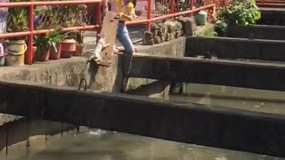 Woman Rescues Cat from Water