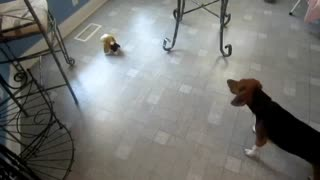 Yet Another Beagle Video