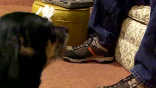 Dog cries at dad not giving him a snack