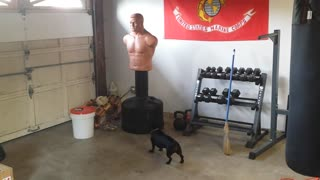 Vicious Dog Attacks Suspicious Looking Man!