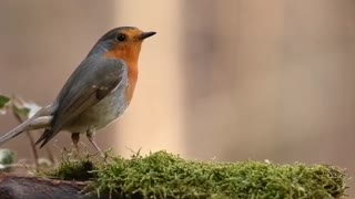 Amazing and sweet bird
