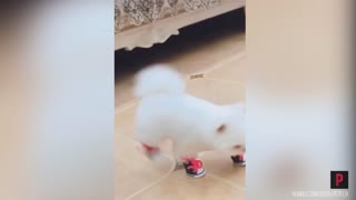 Funny Dog Tries Shoes For The First Time