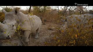Orphaned Rhino's Gertjie and Matimba are released back into the wild