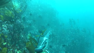 Spearfishing Big Sur - Monterey Co.
