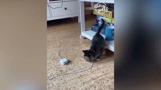 cute cats haha
